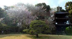 Chinzanso Garden, Tokyo, Japan http://www.cheapojapan.com/chinzanso-garden-and-shinedogawa-park/ #japan #garden #park #sakura #cherryblossom