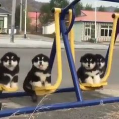 Caption this 💗 Tag someone to see this Follow us @huskyroad @huskyroad . . . 📷:@pawterritory