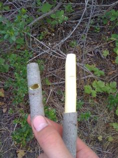 Willow Whistle Tutorial (my uncles used to make these for us)