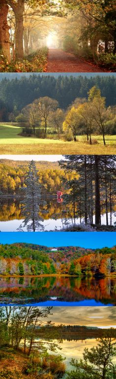 Norway, autumn, forest, norway, autumn, forest, trees, pine needles, house, boat, beach, river
