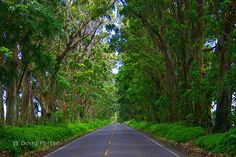 Kauai Tree Tunnel    I could have driven here everyday just go through this path.