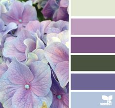 hydrangea hues, This picture was repinned