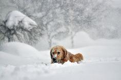 ニューヨーク州、大雪で非常事態宣言【画像】