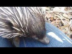 Puggle - YouTube