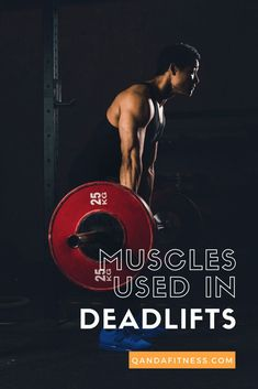 Deadlifts are a popular form of weight training, yet most people fail to do it right. Read on to learn more, including the muscle groups targeted by deadlifting - QandA Fitness - #fitness #deadlift #exercise
