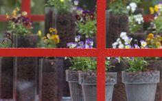 Nella nuova collezione di viole Deltini™ di Syngenta FloriPro Services in 'Fil Rouge'
