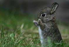 baby bunny. Aww!!