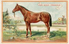 Vintage Graphic – Beautiful Brown Horse