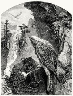 They and their wives and children - happier far Could they have lived as do the little birds That peck along the edges, or the kite That makes its dwelling on the mountain rocks!  Illustration by Joseph Wolf for Wordswoth's Deserted Cottage.  From The brothers Dalziel, by George and Edward Dalziel, London, 1901.  (Source: archive.org)