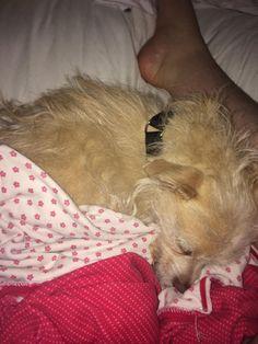 Prince - sleepyhead #perfectpair #adoptme #everybodyneedsabuddy