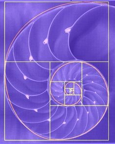 sacred geometry golden ratio