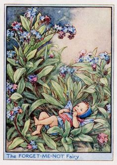 The Forget-Me-Not Fairy. Vintage flower fairy art by Cicely Mary Barker. Taken from 'Flower Fairies of the Garden'. Click through to the link to see the accompanying poem. Cicely Mary Barker, Flower Fairies, Vintage Fairies, Vintage Flowers, Fairy Pictures, Baby Fairy, Beautiful Fairies, Fantasy Illustration, Illustration Flower