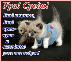 . - анимационные картинки и gif открытки. #открытка #открытки #среда Funny Greetings, Animals And Pets, Cats And Kittens, Good Morning, Greeting Cards, Comics, Words, Pictures, Live