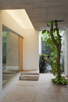 Interior, Minimalist Wooden Home Interior Design By a21 studio: Small Trees With Green Vines Grow Into Ceiling