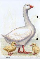 Farm Animals, Paper Art, Garden Sculpture, Bird, Outdoor Decor, Learning, Picasa, Pets, Papercraft