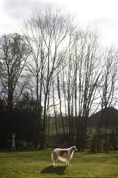 La Creuzette Borzoi Garden, Gardens, Outdoor, Home Landscaping, Tuin, Yard
