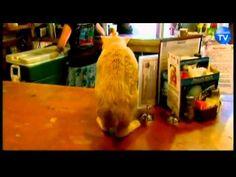 It's a Cat! It's a Mayor! No, It's Stubbs, Alaska's Cat Mayor