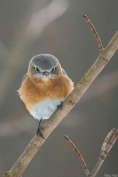 Bird...looks none to pleased!