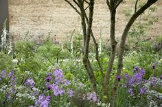 meadow inspired planting by Sarah Price Landscapes photography by Helen Fickling