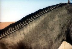 http://suzannewinfield.hubpages.com/hub/Show-Horses-and-their-Beautiful-Braids