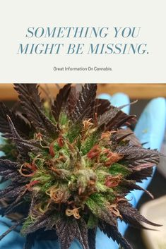 Cannabis/growing/ideas
