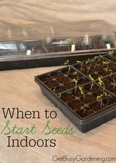 Timing is very important when it comes to starting seeds indoors. If you start your seeds too early, you could end up with weak, leggy seedlings by the time it's warm enough to plant them into the garden. But if you start your seeds too late, the seedlings won't be mature enough for transplanting. Know When To Start Seeds Indoors, and create your own personal seed starting schedule | GetBusyGardening.com
