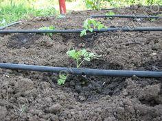 Hydroponics, Solar, Farming, Plants, Gardening, Ideas, Lawn And Garden, Plant, Thoughts