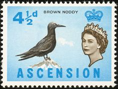 Brown Noddy stamps - mainly images - gallery format