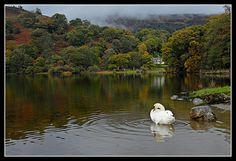 Rydal Water by Mister Oy, via Flickr
