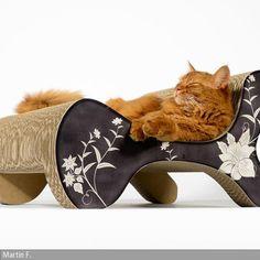 NEU: Das Kratzsofa für Katzen ist eine elegante Kratzmöglichkeit für Katzen in bester Qualität, nachhaltig und aus deutscher Herstellung. Dieses edle Tiermöbel …