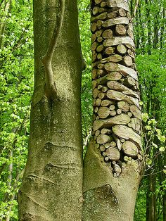 "Part of the ""Art in Nature"" series that we saw on our hike in Belgium. This was by far my favorite piece of the 30+ that we saw. The idea and execution were excellent."