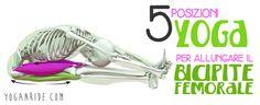 Il bicipite femorale è uno dei muscoli maggiormente soggetti a stiramenti e strappi, ecco perchè è importante allungarlo, vediamo come, Enjoy!  http://www.yoganride.com/5-posizioni-yoga-per-allungare-il-bicipite-femorale/