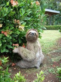 Sloth by flowers