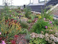 Dealerschap van Sedum daken. Sedum dak op het tuinhuis Green Roof Benefits, Earth Sheltered Homes, Container Gardening, Sustainability, Rooftop Gardens, Living Walls, Green Roofs, Indoor, Architecture