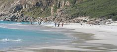 """Noordhoek beach is one of the best dog-friendly beaches in the Western Cape. This huge beach is a paradise for dogs and even has a special """"Doggie Path"""" as well as a designated and cordoned off """"Doggie Loo"""" area. Don't forget to check out the shipwreck when you're there. The Kakapo, a wreck from 1900, is a 40 minute walk from the parking lot but it's worth it! #noordhoek #dogwalks"""