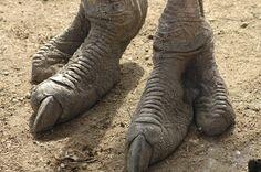 ostrich feet - Google Search