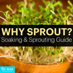 why sprout? Soaking and Sprouting Guide Title