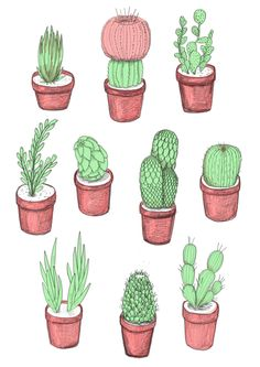 The cactus pattern