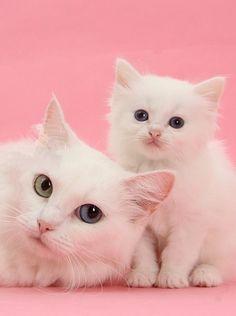 djferreira224:  pretty on pink
