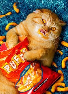 Pretty sure this is how I look when eating Cheesey Puffs.
