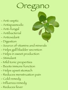 Herbal Medicine health benefits of oregano Cold Remedies, Health Remedies, Herbal Remedies, Natural Medicine, Herbal Medicine, Cough Medicine, Natural Cures, Natural Healing, Stomach Ulcers