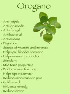 Health benefits of oregano  www.tlcforwellbeing.com www.tlcforweightloss.eu