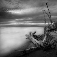 """Stump Island -bw"" by Marvin Spates"