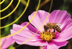 Millions of Bees Die - Are Electromagnetic Signals To Blame? Smart Water, Bee Keeping, Service, Bees, Pictures, Wifi, Bee Boxes, Garden, Beekeeping