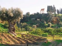 La Valle dei Templi e il Museo Archeologico di Agrigento