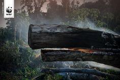 Jede Sekunde verschwindet ein Teil des Amazonas-Regenwaldes. Aber was passiert uns Menschen eigentlich, wenn er eines Tages gar nicht mehr da ist?