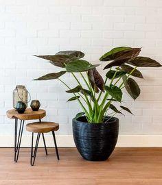69 Ideas For Plants Interieur Table Indoor Plants, Decor, House Design, Diy Plant Stand, Interior, Living Room Windows, Living Room Decor, Plant Decor, Home Garden Design