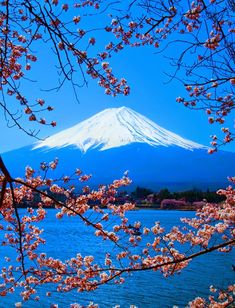Fuji in background of Lake Kawaguchi Yamanashi, Japan Yamanashi, Beautiful World, Beautiful Places, Monte Fuji, Hakone, Natural Scenery, Places Around The World, Japan Travel, Belle Photo
