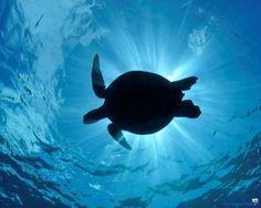 Sea Turtles (this looks just like a tattoo I have)