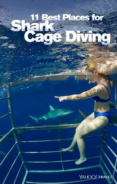 Best Places for Shark Cage Diving From Mexico to Vegas, these are the world's most spectacular places for an up-close caged view of sharks.From Mexico to Vegas, these are the world's most spectacular places for an up-close caged view of sharks. Shark Diving, Scuba Diving, Cage Diving With Sharks, Las Vegas, Vacation Trips, Dream Vacations, Vacation Spots, Vacation Ideas, Oh The Places You'll Go